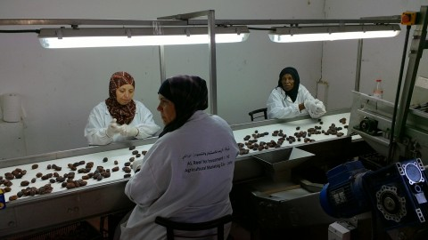 Uniformed workers examine dates on a conveyer belt